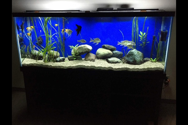 large fish tank with blue background filled with various fish, rocks, and plants