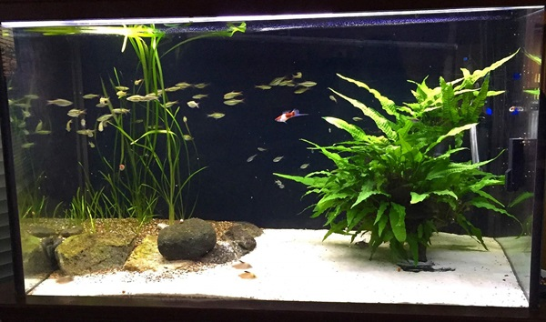 fish tank with sand substrate, plants, and a school of fish