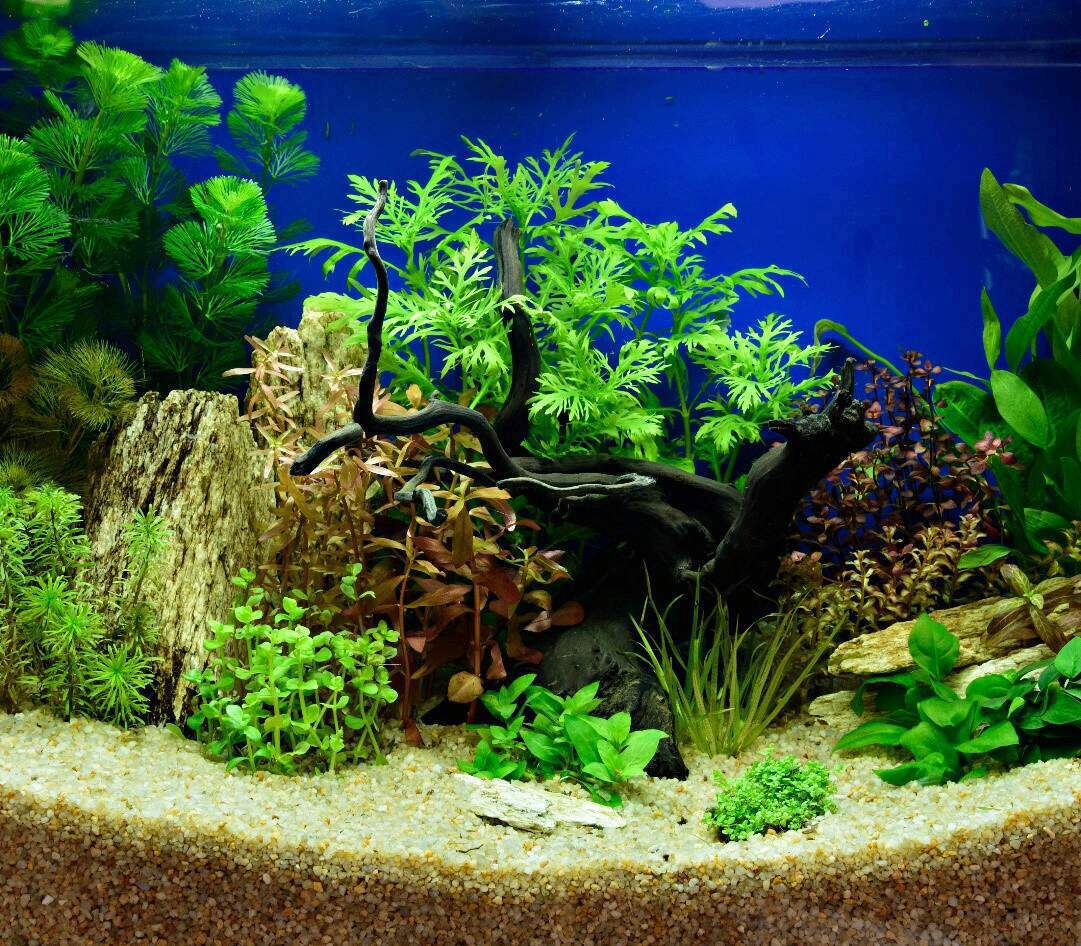Maintaining a Planted Fish Tank